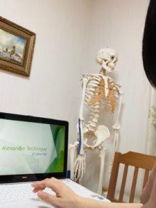 愛用の骨格模型