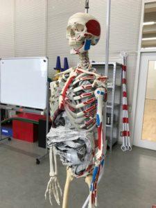 実体験!解剖学!